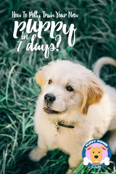 Want to know how to potty train a puppy fast? Did you know it can be done in 7 days? Check out how to teach your new puppy to potty outside with these quick house training tips. #PuppyPowerClub #puppies #pottytraining