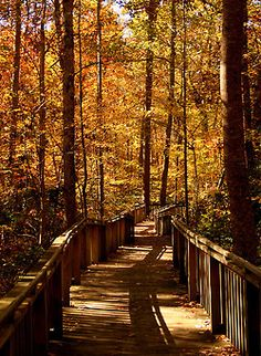 Desoto State Park   Rachel Pennington Flickr