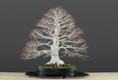#bonsai art #盆栽(Via:  luisvallejoestudiobonsai.com  )おぉ...これは見事。白い盆栽って、かっこいいですね。化粧砂にK砂をよろしく(^^)
