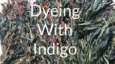 Dyeing with Natural Indigo dye. The day I learned how use natural dyes &...