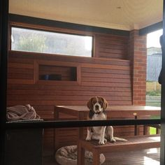 let me in! enjoying the sunshine #sunshine #autumn #warrnambool #love3280 #dogs3280 #beaglier #beagle #cavalier by pippa_the_beaglier