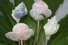 shimmering seashells floral picks