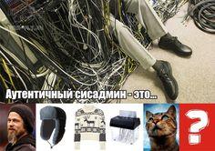 Котэ, котики и котаны