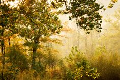 Nine Mile Run at Frick Park in Pittsburgh, via Flickr.