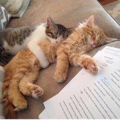 The kittens slept on my homework