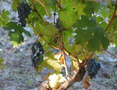 Wine tasting at #Mendoza, Argentina