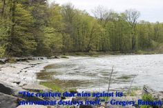 """""""The creature that wins against its environment destroys itself.""""~ Gregory Bateson quote"""