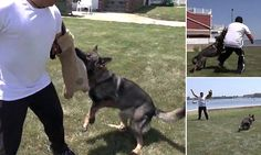 Must watch: Two simple ways to survive a dog attack