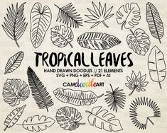 Plants Doodle Tropical Ideas For 2019 Tattoo Design Drawings, Doodle Drawings, Doodle Art, Doodle Frames, Tattoo Designs, Leaf Drawing, Plant Drawing, Sketch Drawing, Drawing Flowers