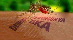 Saúde – É hora de reforçar as medidas caseiras no combate ao Aedes Aegypti O reforço de limpeza e higienização nas áreas comuns de ruas e condomínios é fundamental para evitar a proliferação de mosquitos. Saúde – É hora de reforçar as medidas caseiras no combate ao Aedes Aegypti &nbsp...