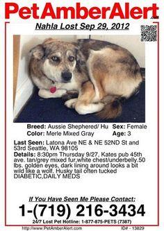Pet Amber Alert!