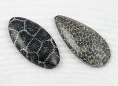 Coral (left) and bryozoans (right) are organisms that live in warm, shallow marine waters. Fossilized by infilling and replacement w/ quartz or calcite.