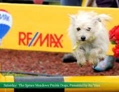 The Spruce Meadows Prairie Dogs presented by Re/Max, 2012 National
