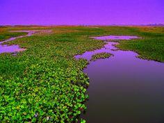 Pantanal  Brazil by rosalia c, via Flickr