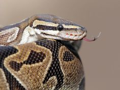 Israël : 5 personnes blessées par des morsures de serpent en un mois