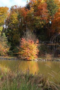 Autumn in Arboretum Volčji Potok