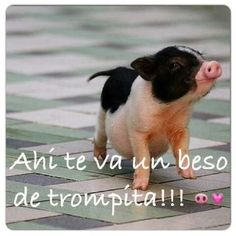 News Non Disponibile - Ultime Notizie I Love You Funny, Humor Mexicano, Price Chart, Real Life Quotes, Inspirational Thoughts, Real Estate Marketing, Baby Love, Corgi, Motivation