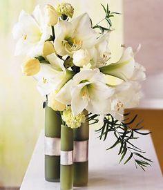 kuhles stiefmuetterchen die sympathischen fruehblueher auflistung images der cabaeaccafd amaryllis vase