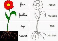 Crapouillotage: La Plante