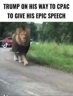 Funny Politics, Silent Majority, Trump Quotes, Best Man Speech, Usa Country, Political Quotes, Pro Trump, Trump Train, Lion Of Judah