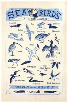 Sea birds, coastal birds and waders tea towel print. Illustration by Matt Johnson for Seasalt Cornwall. Available now £6.50
