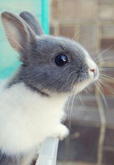 Bunny - cute