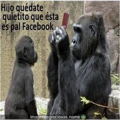 frases chistosas de animales - Google Search