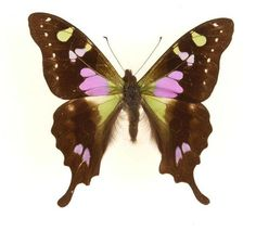 7 most beautiful butterflies in the world