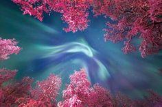 #FotografíaCientífica Corona de Aurora. Ondas color turquesa de la Aurora Boreal se asoman entre las copas nevadas de los árboles en Murmansk, Rusia.  Foto: Yulia Zhulikova/Museo Marítimo Nacional de Inglaterra/Fotógrafo del año 2017 - Observatorio Real de Greenwich  #cielo #universo #ciencia #fotografía