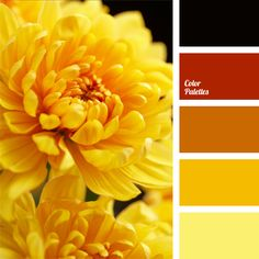 As if penetrated with rays of the midday sun, this bright color palette includes many shades of yellow and amber colors. It can be used for interior decora. Black Color Palette, Red Color Schemes, Colour Pallette, Color Combos, Color Yellow, Bright Yellow, Yellow Flowers, Yellow Interior, Color Balance