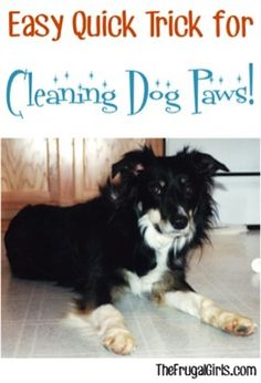 On the hunt for a Quick and Easy Trick for Cleaning Dog Paws? This simple little trick works like a charm! Akita Dog, Dog Hacks, Old Dogs, Dog Life, I Love Dogs, Dog Training, Dogs And Puppies, Doggies, Dog Lovers