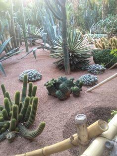 Long Lasting Desert Landscaping Plants Succulent Landscaping, Landscaping With Rocks, Landscaping Plants, Landscaping Ideas, Landscape Design, Garden Design, Desert Landscape, Cactus Plante, Cactus Cactus