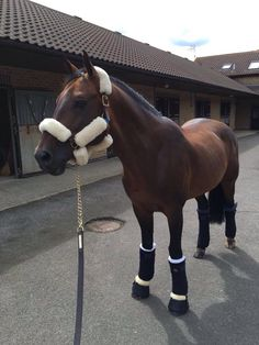 Tic Tac(Ben Maher's ride for the Olympics)