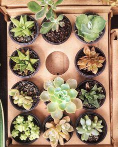 Faça do seu lar o melhor lugar para você estar.  #succulent #cactus #nature