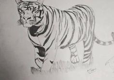 My tiger 🐯