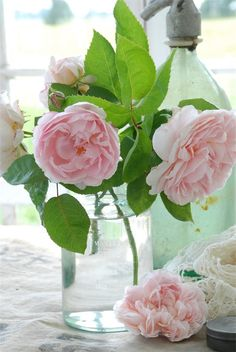 beautiful roses. These are gorgeous...they resemble peonies.