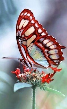 butterfly | vlinder