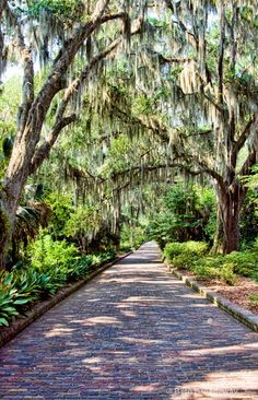 Beautiful Gardens Around The World - MaClay Gardens Park- Tallahassee- FL Must visit! My friend was proposed to here, such a cool place! Beautiful World, Beautiful Gardens, Beautiful Places, The Places Youll Go, Places To See, Key West, The Good Place, Natural, Scenery