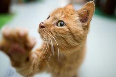Bis spätestens Ende 2014 soll in Mecklenburg-Vorpommern eine landesweite Katzenverordnung eingeführt werden. Damit solle das unkontrollierte Vermehren von freilaufenden Katzen begrenzt werden.  >>> http://www.welt.de/132099537