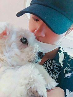 Jin and Jjangu Seokjin, Namjoon, Jhope, Jimin, Bts Taehyung, Bts Jin, Yoonmin, K Pop, Bts Dogs