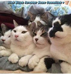 Itteh Bitteh Furebbur Home Committeh ♥