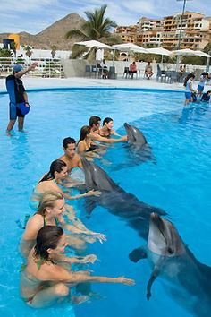Captive slave performing dolphins hate you, make no mistake, but they need to be fed so they're forced to be nicey-nicey.