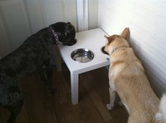 Lack table Ikea hack for two dog food bowls and one large water bowl. Exactly what we need!