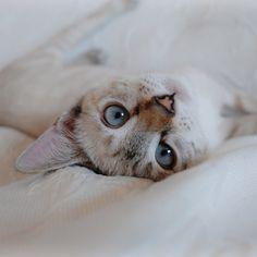 #white #cat #photografy