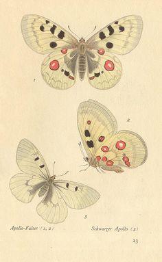 papillons d 19 by pilllpat (agence eureka), via Flickr