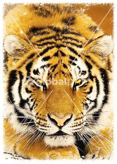 GBF 442 - Animal print