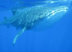 Hawaii Big Island, Whale Watching Tours | MyTourHawaii.com