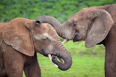 Red Elephants by Mario Moreno on 500px