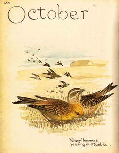 Sage Parnassus: Edith Blackwell Holden (b. September 26, 1871)