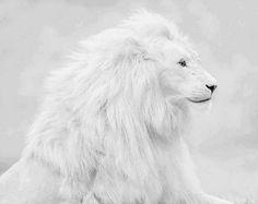 Albino Aslanı Nerede Yaşar